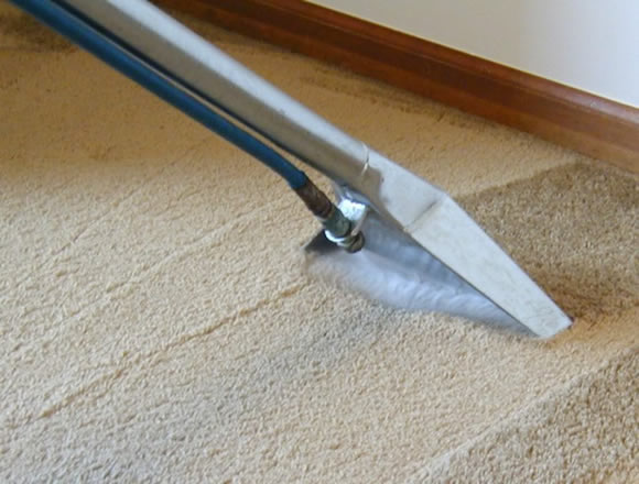 Tanin Carpet Cleaning